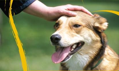 עיקור וסירוס כלבים בחינם בלוד