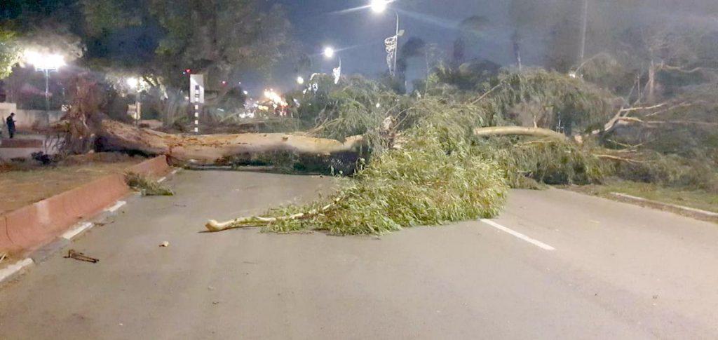 2 עצי אקליפטוס ענקיים קרסו בסופה